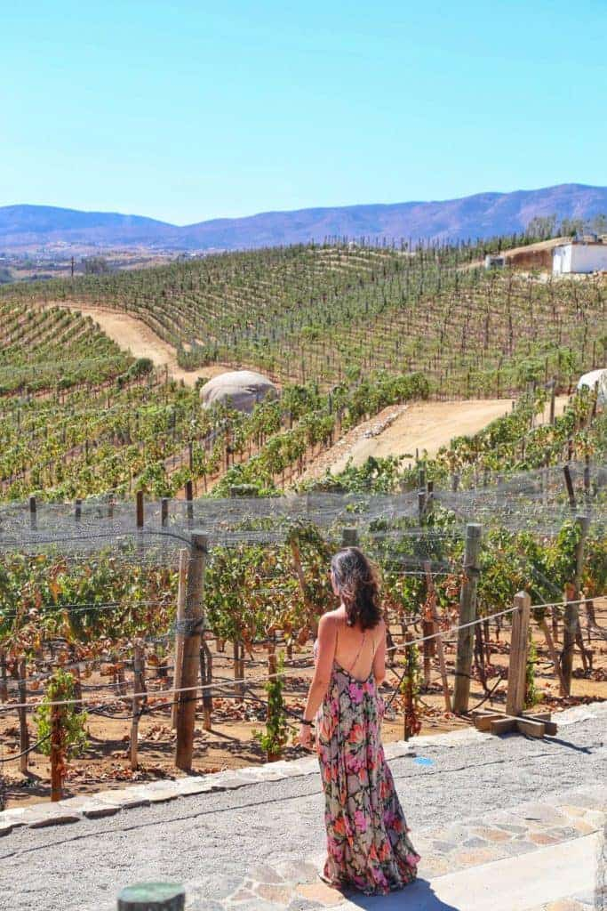 Valle De Guadalupe - Mexicos Wine Country- Sunny Coastlines