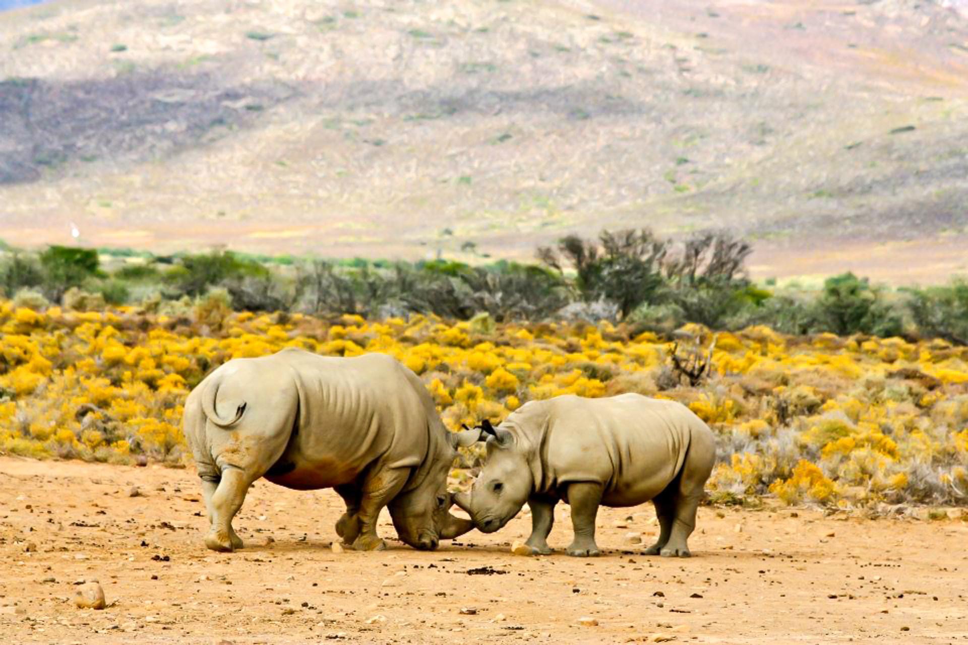 25 Images to Inspire You to go on a Safari in South Africa - Sunny Coastlines Blog