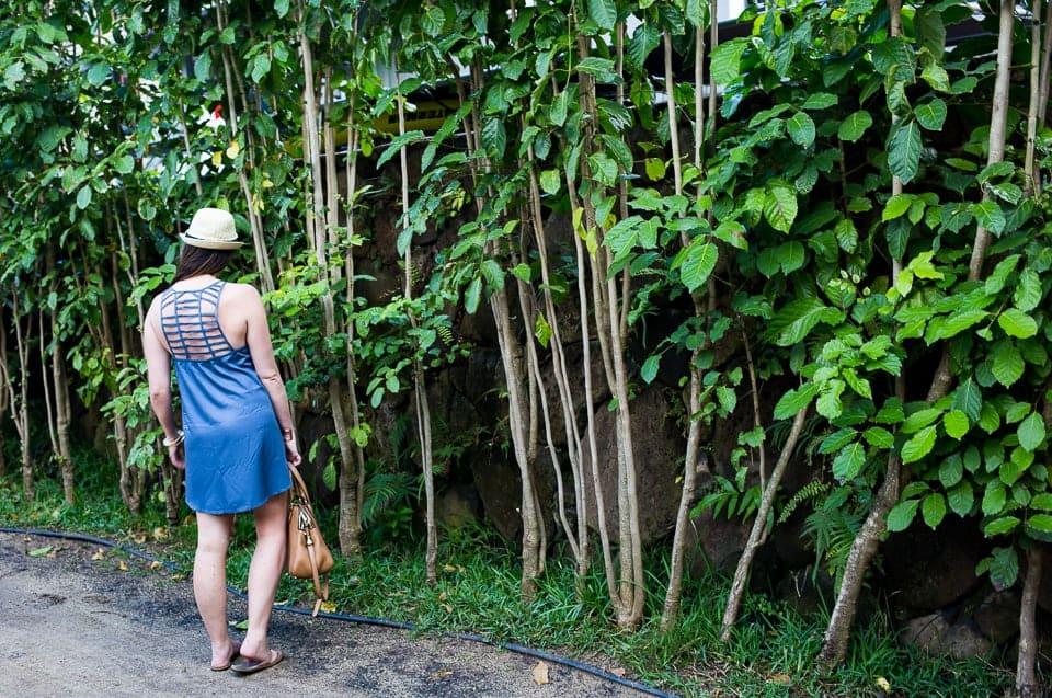 Hawaiian Blues - Sunny Coastlines Style Blog