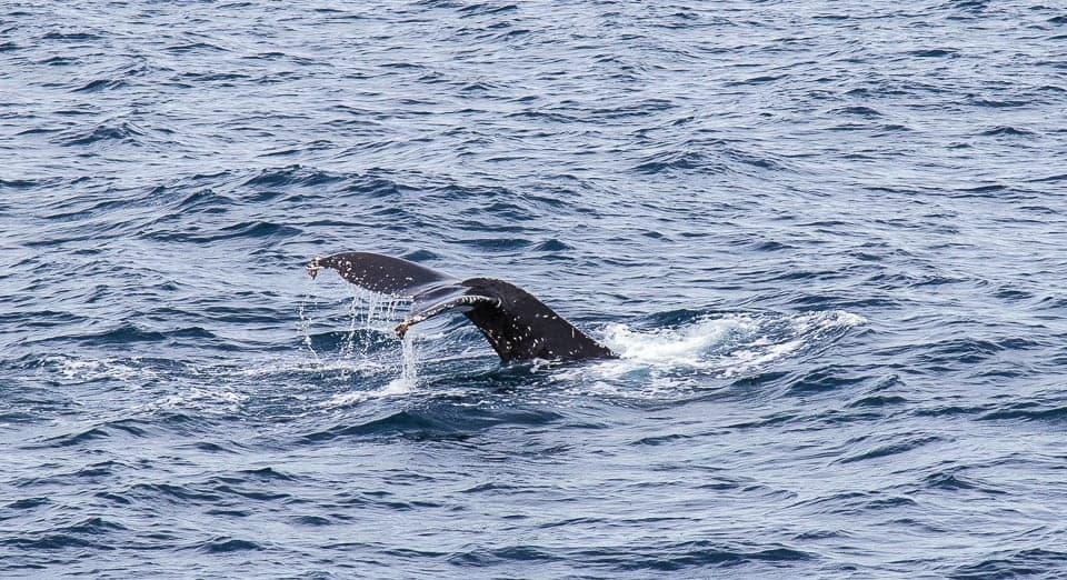 San Diego Whale Watching ~ Sunny Coastlines Travel Blog