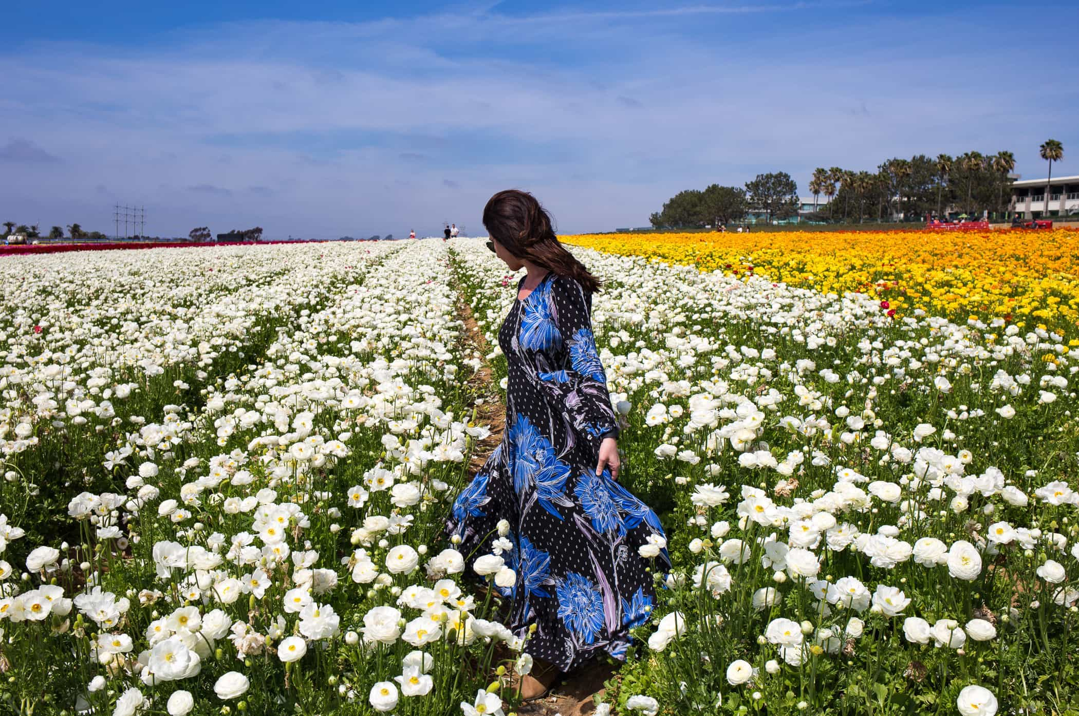 Spring Flowers ~ Sunny Coastlines Style Blog