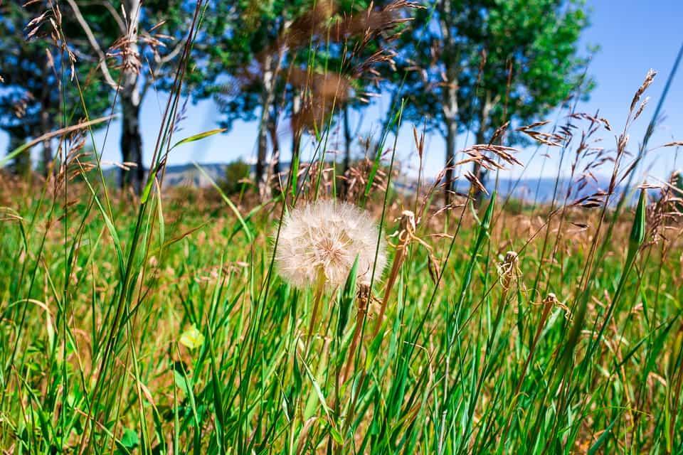Grand Teton National Park in 12 Photos