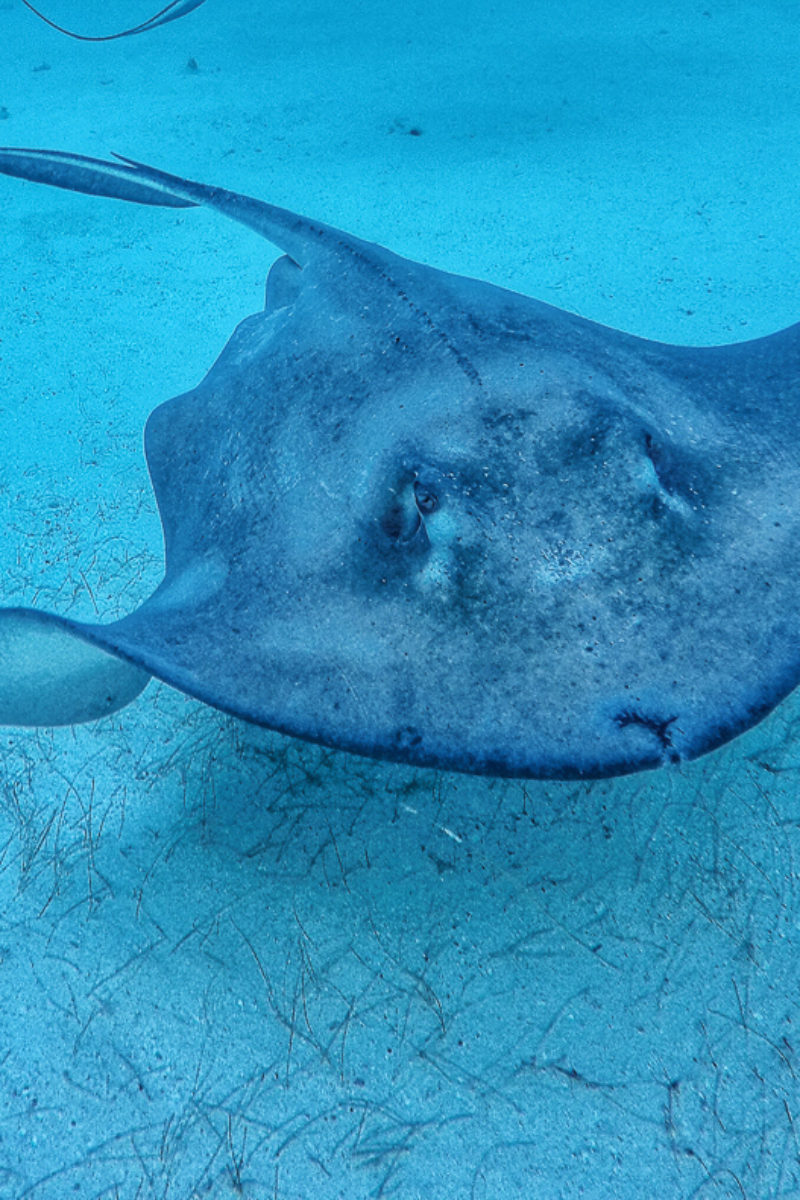 Face to Fin - Diving Stingray City ~ Sunny Coastlines Travel Blog